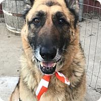 Adopt A Pet :: Beate - Sacramento, CA