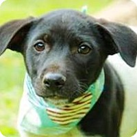 Adopt A Pet :: Carl - San Ramon, CA