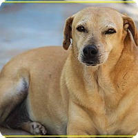Labrador Retriever/Terrier (Unknown Type, Medium) Mix Dog for adoption in St. Catharines, Ontario - Lala