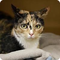 Adopt A Pet :: Kelli - Kettering, OH