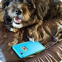 Adopt A Pet :: Sadie - Woodbridge, VA