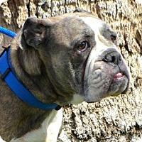 Adopt A Pet :: Neela - Goodyear, AZ