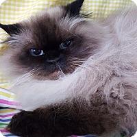 Adopt A Pet :: Chloe 26658 - Prattville, AL