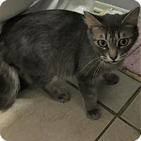 Adopt A Pet :: Misty - Avon Park, FL