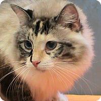 Adopt A Pet :: Chantelle - Maynardville, TN