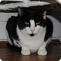 Adopt A Pet :: Scrappy - Sanford, ME