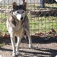 Adopt A Pet :: Xena - Longview, TX