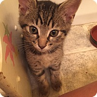 Adopt A Pet :: Alice - Richmond, VA