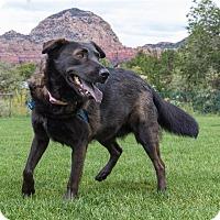 Adopt A Pet :: Lila - Sedona, AZ