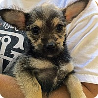 Adopt A Pet :: Daisy - Atlanta, GA