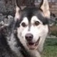Adopt A Pet :: Charlie - Campbell, CA