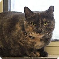 Adopt A Pet :: Mickey - Naperville, IL