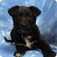 Adopt A Pet :: BANCHE - Westminster, CO