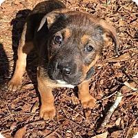 Adopt A Pet :: April - Thompson, PA