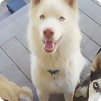 Adopt A Pet :: Echo - Clearwater, FL