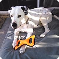 Adopt A Pet :: Charlie - Vista, CA