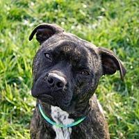 Adopt A Pet :: Potter - Dayton, OH
