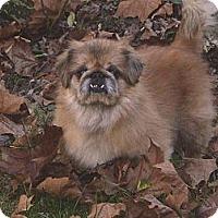 Adopt A Pet :: Percy - Vansant, VA