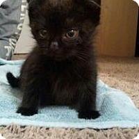 Adopt A Pet :: Abraham - Xenia, OH