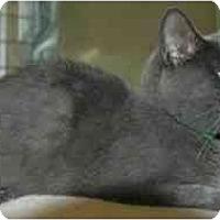 Adopt A Pet :: Captain - Pendleton, OR