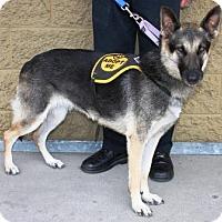 Adopt A Pet :: Zeena - Gilbert, AZ