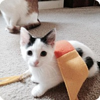 Adopt A Pet :: Suki - Stafford, VA