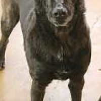 Shepherd (Unknown Type) Dog for adoption in Memphis, Tennessee - Sam
