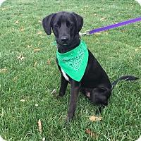 Adopt A Pet :: Randy - LaGrange, KY