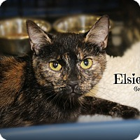 Adopt A Pet :: Elsie - Springfield, PA