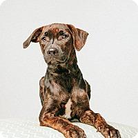 Adopt A Pet :: Rimi - Houston, TX