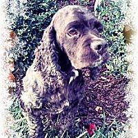 Adopt A Pet :: Breezy - Sugarland, TX