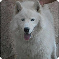 Adopt A Pet :: Chip - Arvada, CO
