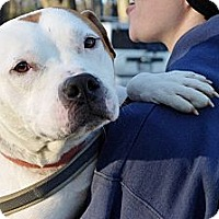 Adopt A Pet :: Cody - Reisterstown, MD