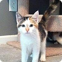 Adopt A Pet :: Samantha - Monroe, GA