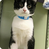 Adopt A Pet :: Pringle - Medina, OH