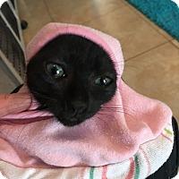 Adopt A Pet :: Lane - Deerfield Beach, FL