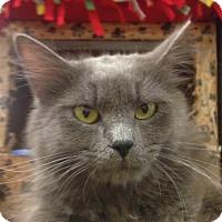 Adopt A Pet :: Smoke - Winchester, CA