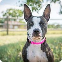 Adopt A Pet :: Pawdrey Hepburn - Cheyenne, WY