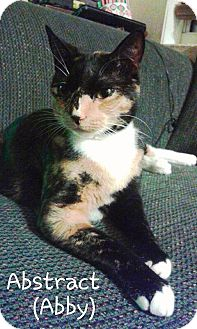 Domestic Shorthair Cat for adoption in Ocala, Florida - Abby (Abstract)