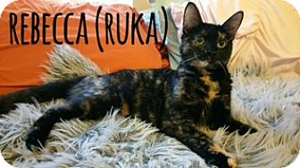 Domestic Shorthair Cat for adoption in Glendale, Arizona - REBECCA (RUKA)