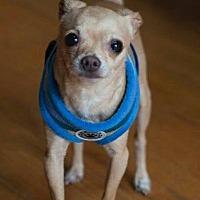 Adopt A Pet :: Tito - Matthews, NC