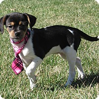 Adopt A Pet :: Marcie - New Oxford, PA