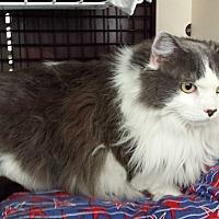 Adopt A Pet :: Miranda - Frederick, MD