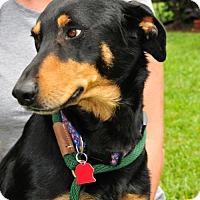 Adopt A Pet :: Tasha - Houston, TX