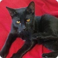 Adopt A Pet :: Little T - Jackson, NJ