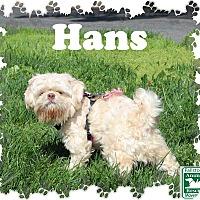 Adopt A Pet :: Hans Solo - Fallston, MD