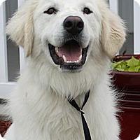 Adopt A Pet :: Benson -Adopted - Oklahoma City, OK