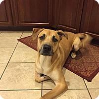 Adopt A Pet :: MOSHI - Higley, AZ