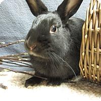 Adopt A Pet :: Santino - Newport, DE