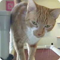 Adopt A Pet :: Trixie - Hamburg, NY